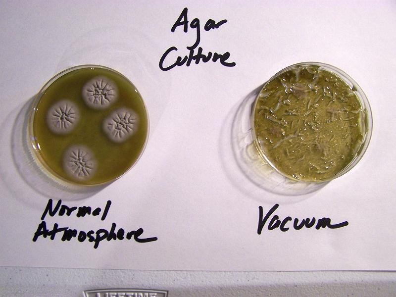 Agar Culture Vacuum Testing.