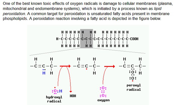 peroxidation