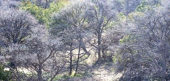 Piñon Pine Die-Off