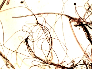 Spider Web 500x Nov 02 2017x300.jpg